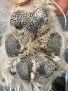 Paw Before