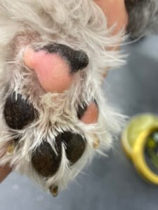 Paw After
